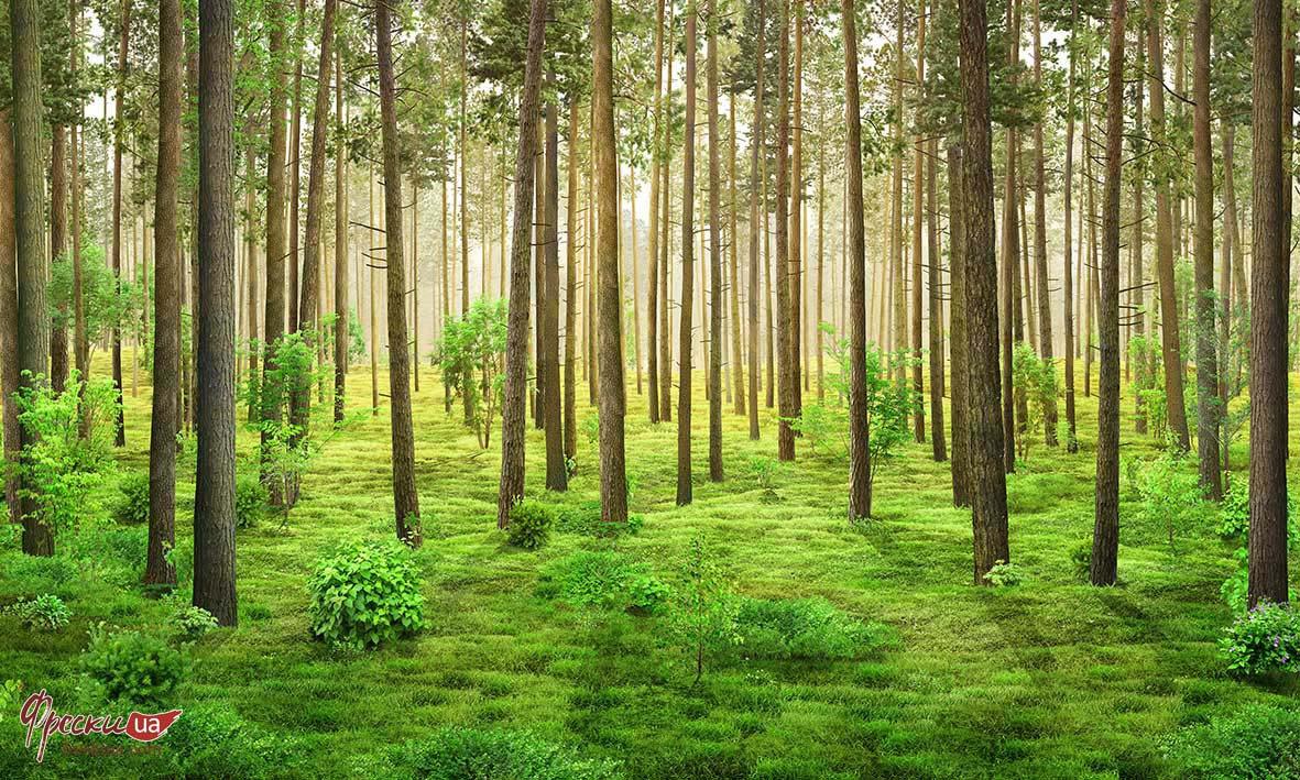 Cây lấy gỗ tự nhiên